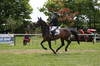 Nottinghamshire's Danielle Farnsworth wins the British Horse Feeds Speedi-Beet HOYS Grade C Qualifier at Nottinghamshire County Show