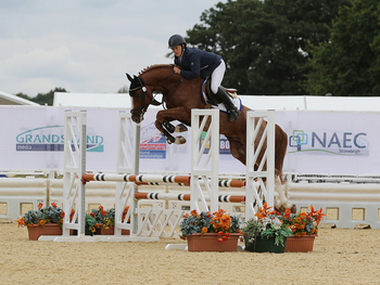 A new sponsor for the National 4 year old Championship at the British Showjumping National Championships