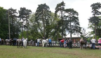 The Netley Hall Country Amp Equestrian Show The Official