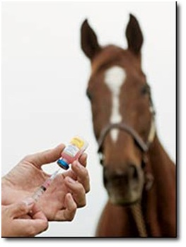 Microchipping and Vaccination Days at Ledston Equine Centre