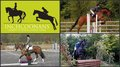 Inchcoonans Equestrian first British Showjumping show is a huge success