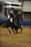 Avon young showjumper Jordan Phelps claims the  Animo Pony Discovery as her own
