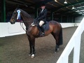 Laura Birch at British Showjumping Club Show at Brook Farm TC Essex
