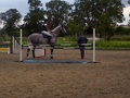 Young Horse Training 2014