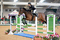 Derbyshire's Young Showjumper Charlotte Goodwin wins the Dodson & Horrell National Amateur 0.95m Championship