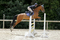 Emily Rodney jumps to victory in KBIS Insurance Senior British Novice Second Round at Rectory Farm