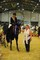 ALEXANDERS HORSEBOXES BRITISH SHOWJUMPING SCOPE FESTIVAL - MONDAY